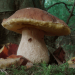 http://pinemountainarts.org/sites/default/files/imagecache/lightbox/Boletus_edulis3_0.png